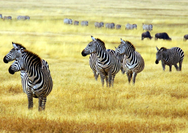 Image result for arusha national park
