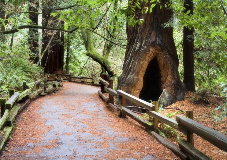 Muir Woods Aktivitaten 2019 Viator