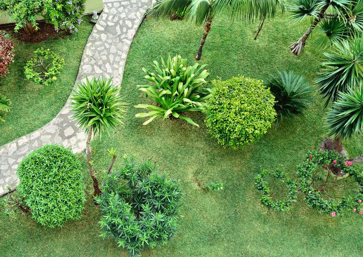 Palm Groves Garden