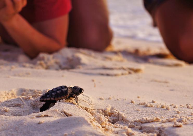 Playa İztuzu (Turtle Beach)