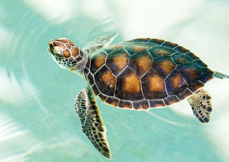 Mexican Turtle Center (Centro Mexicano de la Tortuga)