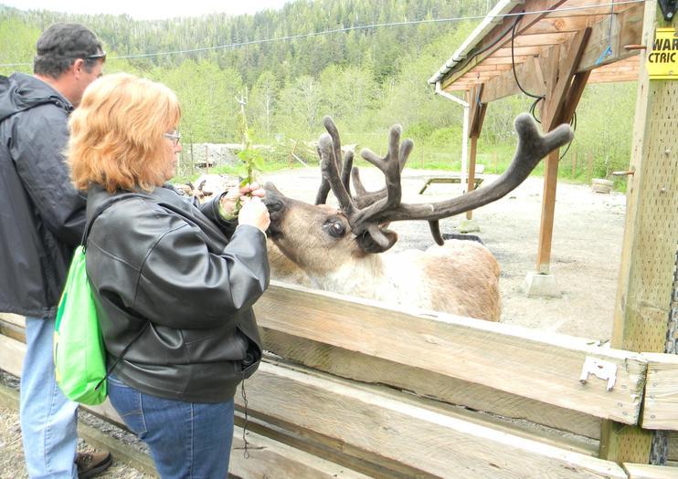 Santuario de la Selva de Alaska