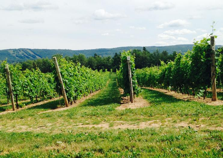 Sainte-Famille Wines