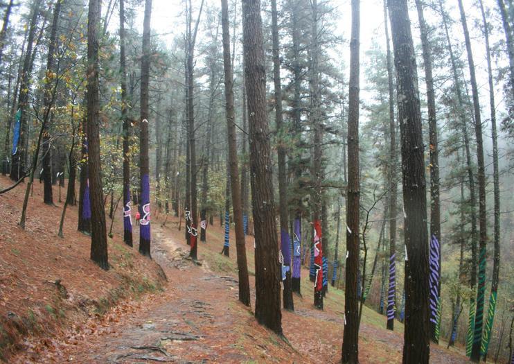 Oma Forest (Bosque de Oma)