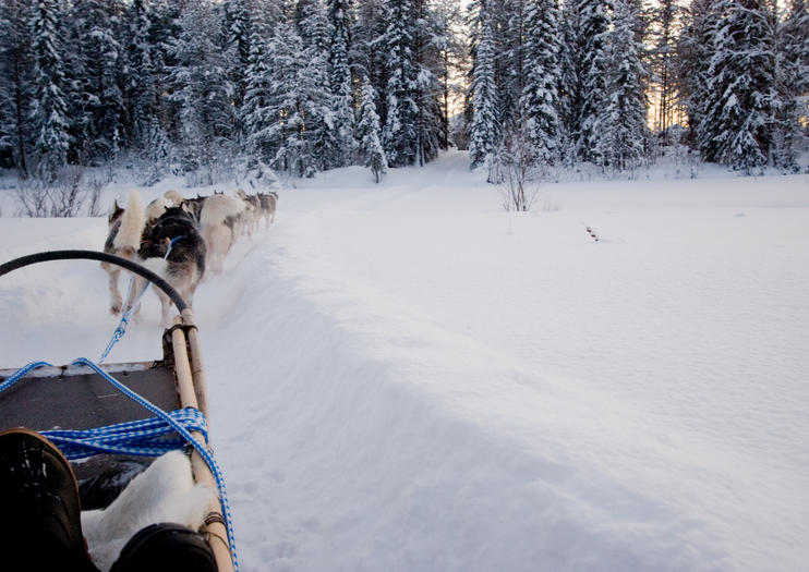 Nature Safaris in Lapland