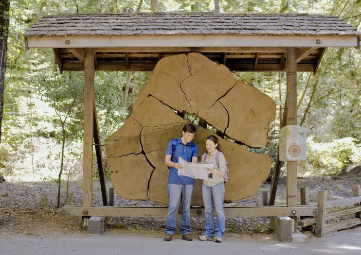 The Best Henry Cowell Redwoods State Park Tours & Tickets 2019 ... Henry Cowell State Park Hiking on shady state park, rv park, calaveras big trees state park, wilder ranch state park, morro bay state park, butano state park, castle rock state park, kodachrome basin state park, samuel p. taylor state park, portola redwoods state park,