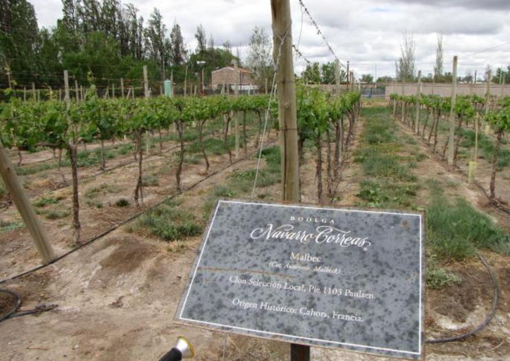 Navarro Correa Winery