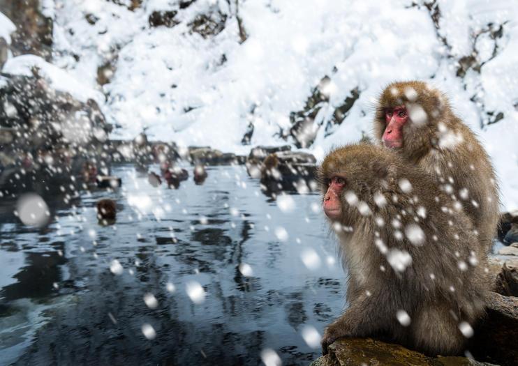Jigokudani Monkey Park (Jigokudani Yaen Koen)