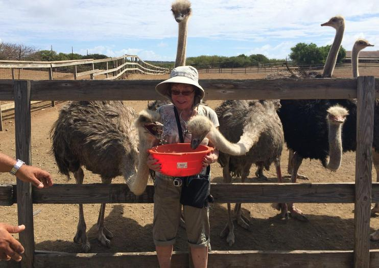 Curacao Ostrich Farm Curacao Tickets & Tours - Book Now
