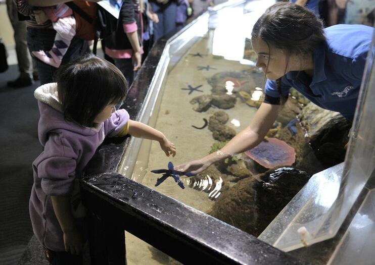 Underwater World SEA LIFE® Aquarium