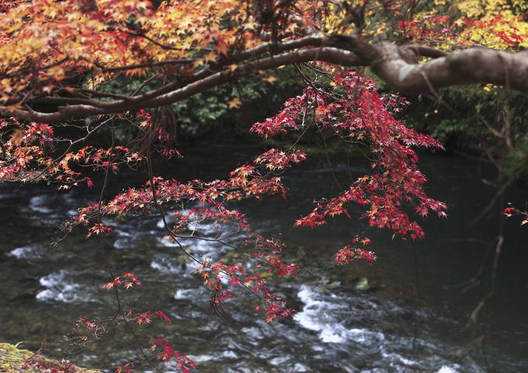 Rivière Kiyotaki