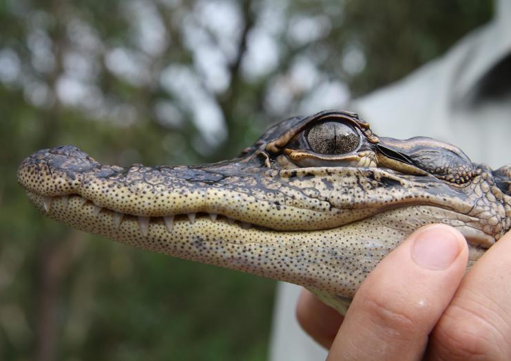 Parc des reptiles australiens