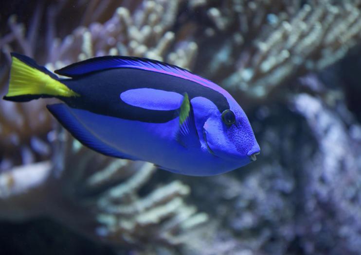 Aquarium SEA LIFE de San Diego
