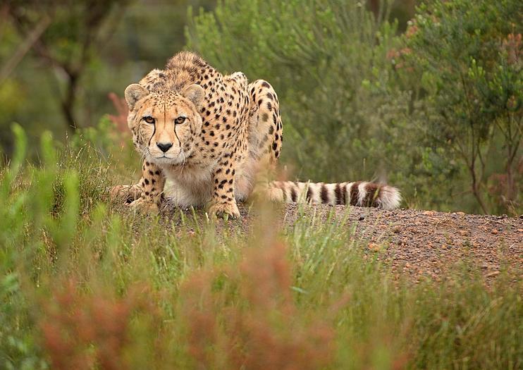 Tenikwa Wildlife Awareness Centre