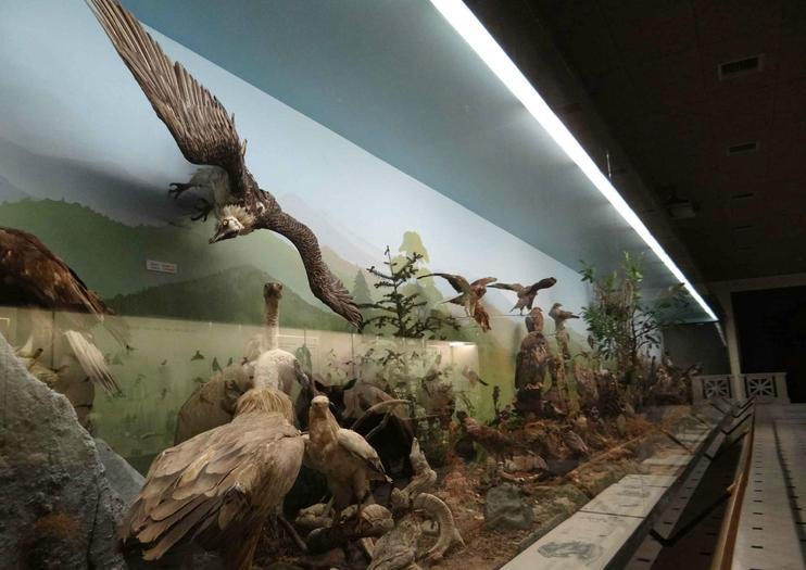 Musée d'histoire naturelle de Goulandris