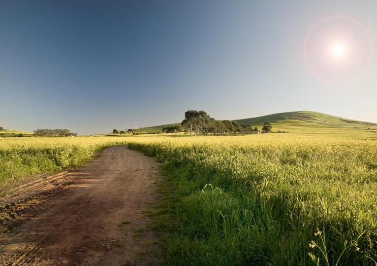 Route des vins de Swartland