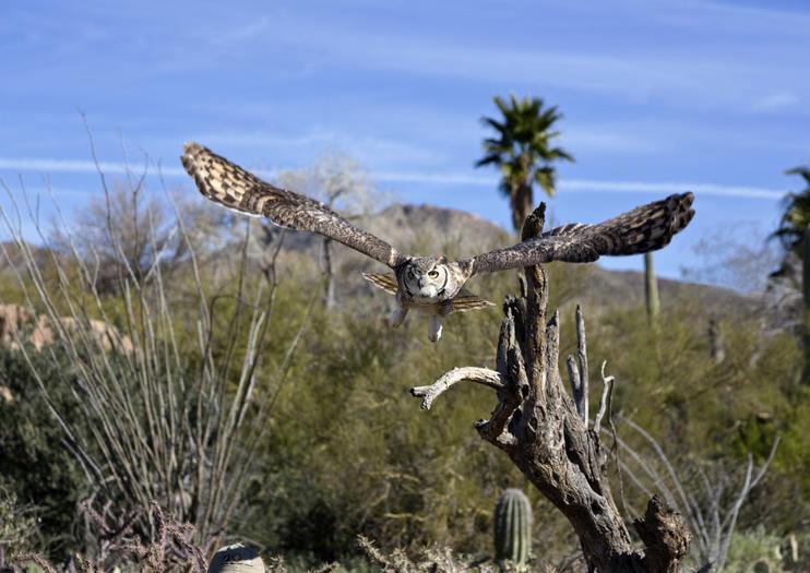 Museo del Desierto Arizona-Sonora