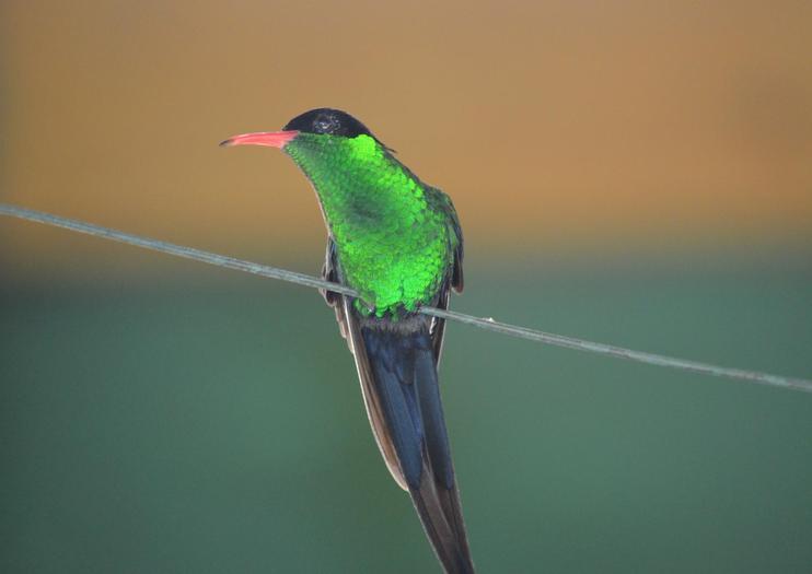 Rocklands Bird Sanctuary
