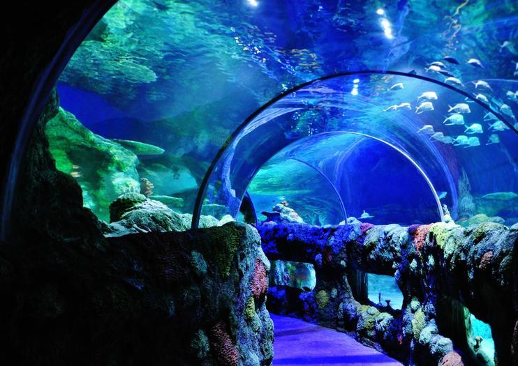 SEA LIFE® – Charlotte-Concord Aquarium
