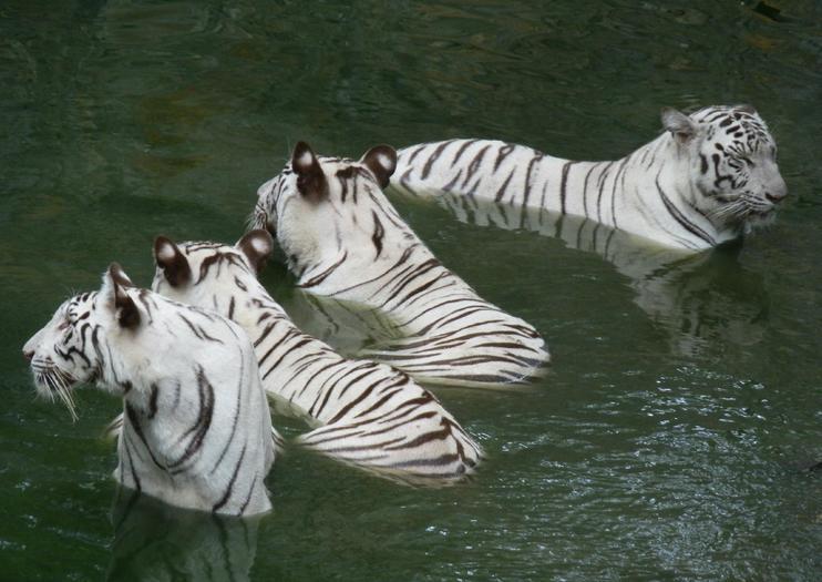 Parque Zoológico de Arignar Anna