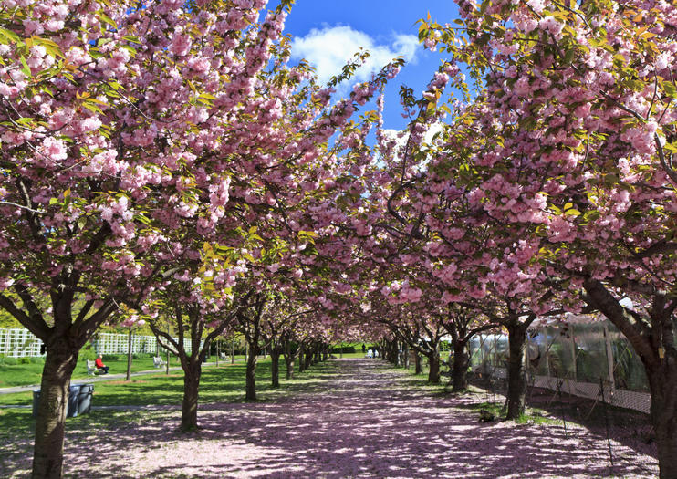 Moderne The Best Brooklyn Botanic Garden Tours & Tickets 2020 | Viator DD-19