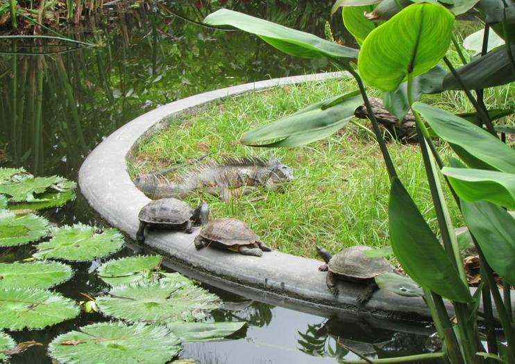 Jardin botanique de La Laguna