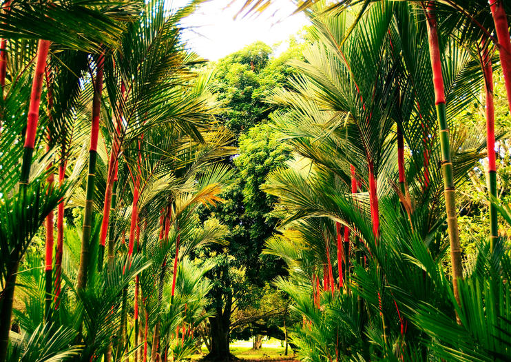 Jardin Botanique Lancetilla