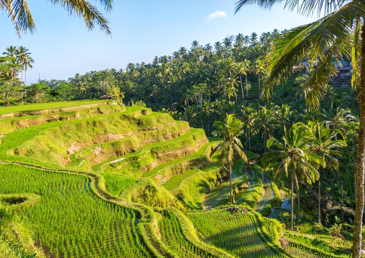 Rizières en terrasse de Tegalalang