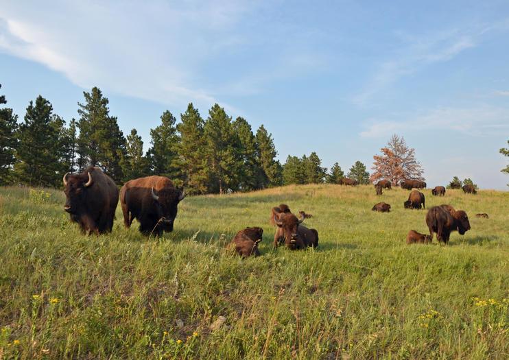 Parc d'État Custer