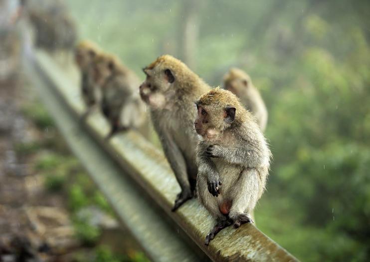 Zoo de Bali