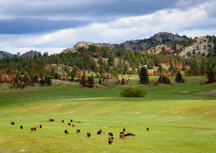 Colinas Negras (Black Hills)