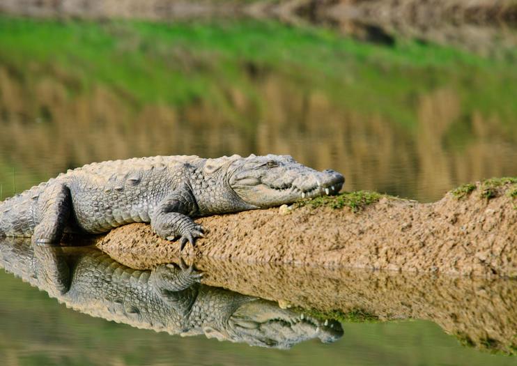 National Chambal Sanctuary