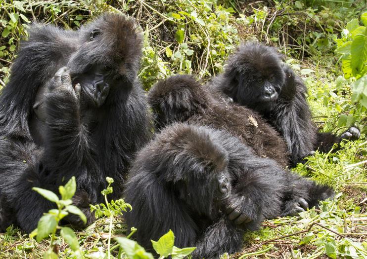 Parque Nacional de Bwindi