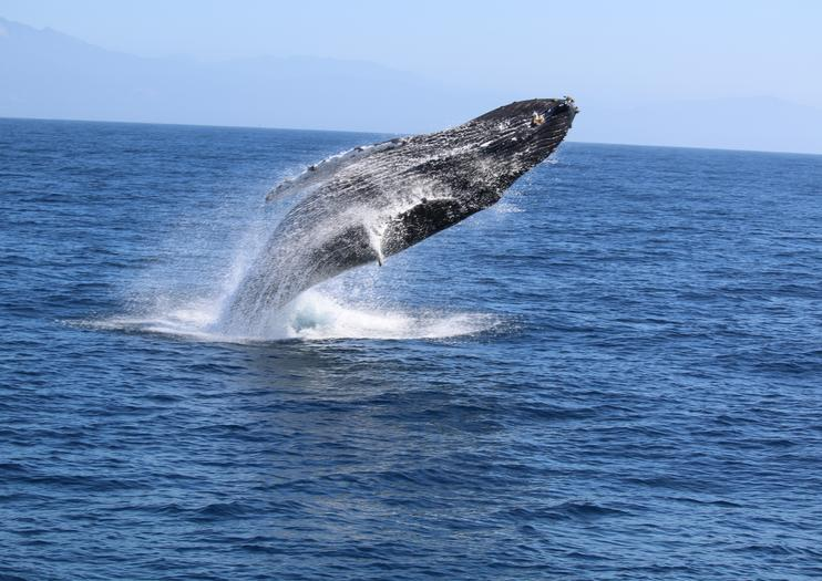 Whale Watching Tours in Long Beach