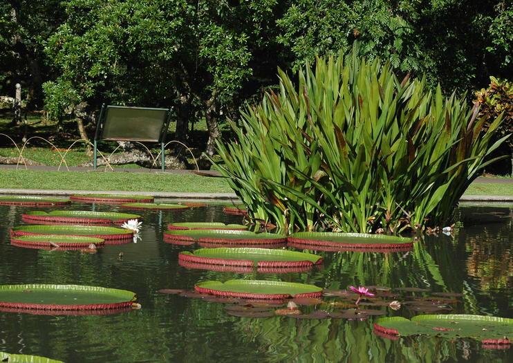 Best Bogor Botanical Gardens Kebun Raya Bogor Tours Trips Admission Tickets West Java