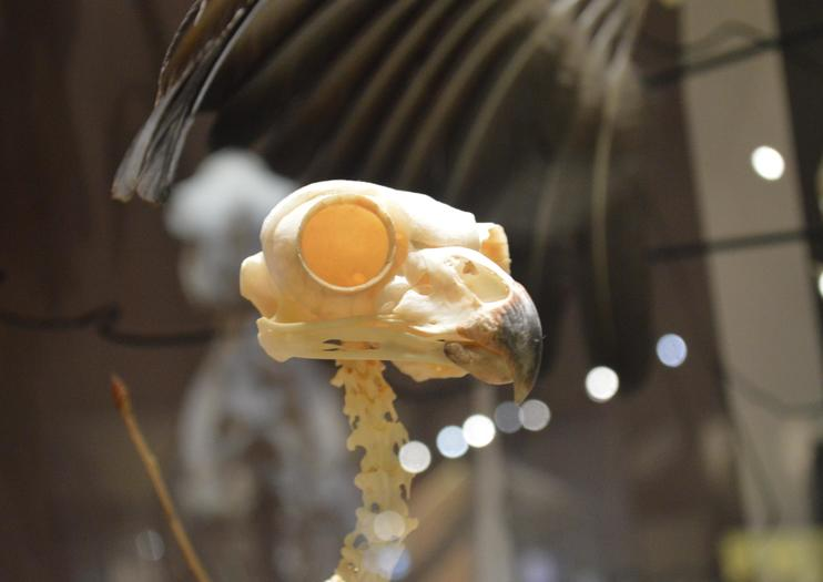 SKELETONS: Museum of Osteology!