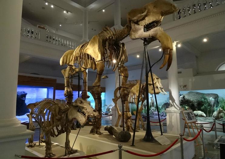 Museu Nacional de História Natural Grigore Antipa