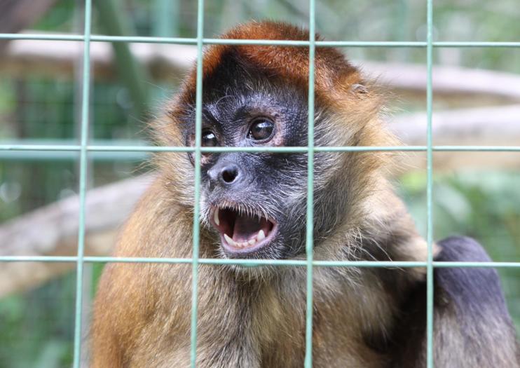 Proyecto Asis Wildlife Rescue Center
