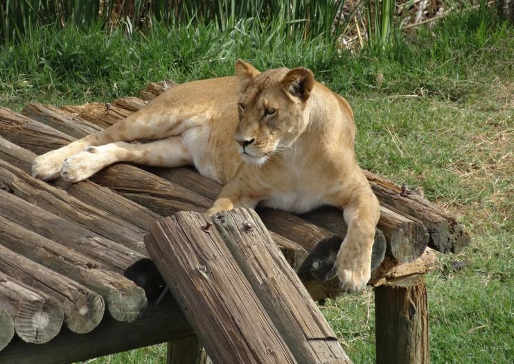 Guadalajara Zoo (Zoológico Guadalajara)