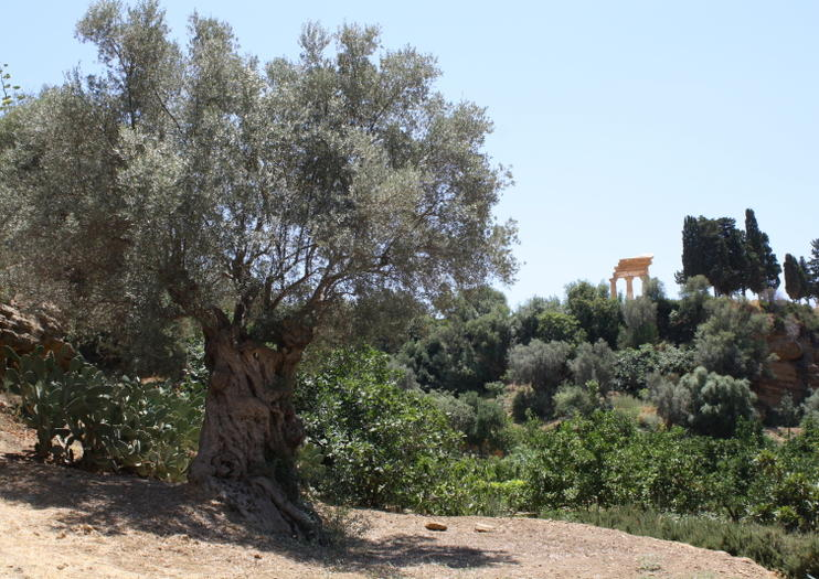 Kolymbetra Garden (Giardino della Kolymbethra)