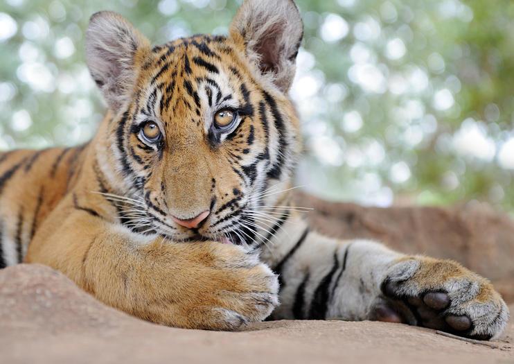Big Cat Habitat & Gulf Coast Sanctuary