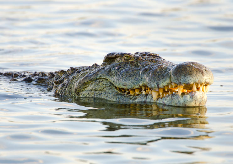 Crocodile Ranch and Wildlife Sanctuary