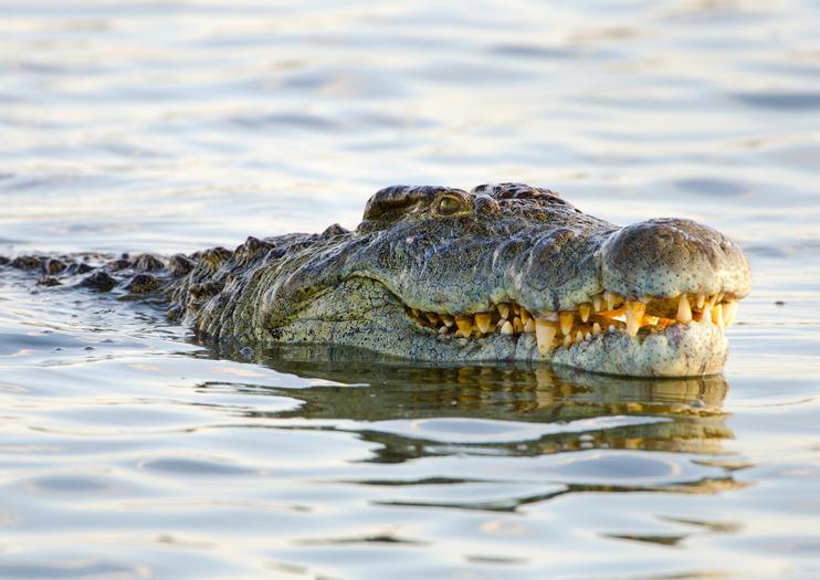 Victoria Falls Crocodile Park