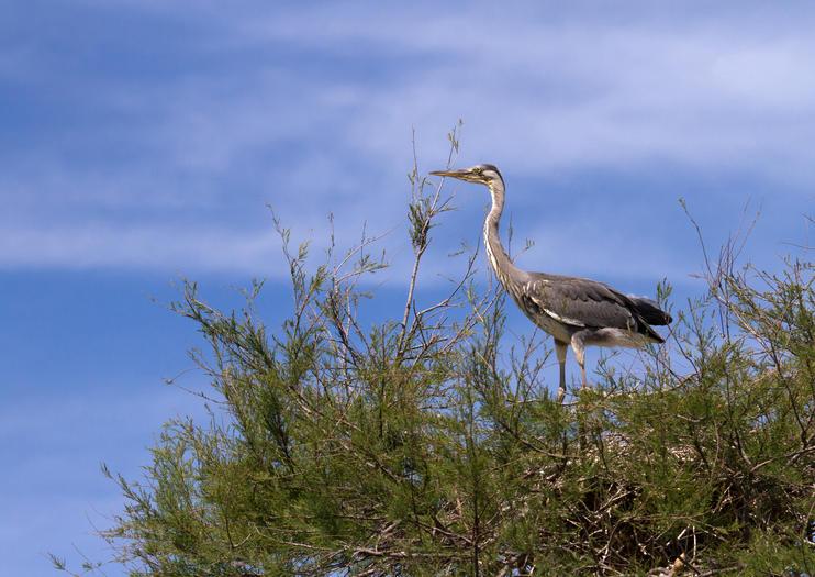 Pont de Gau Ornithological Park (Parc Ornithologique du Pont de Gau)