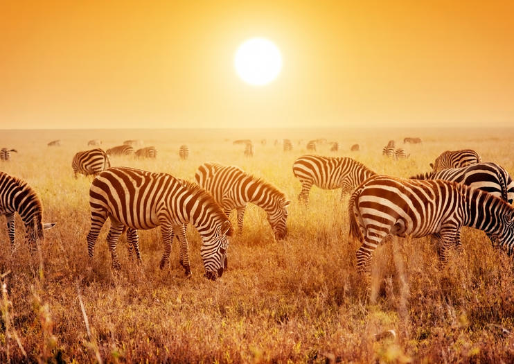 Wildlife Safari Tours in Africa