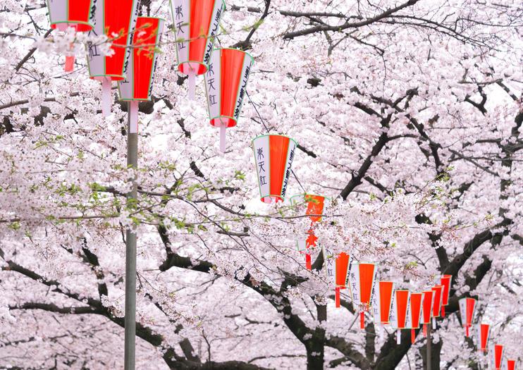 Kirschblütensaison in Tokio