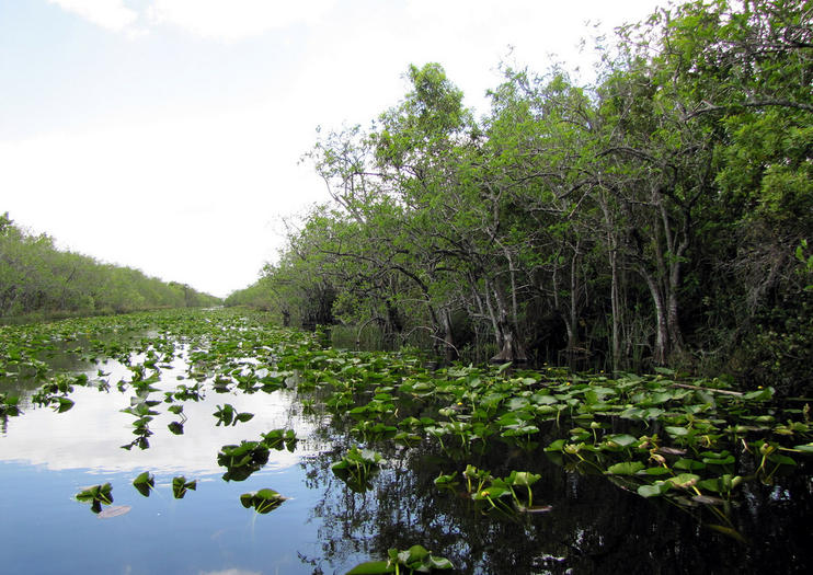 Everglades Touren ab Fort Lauderdale
