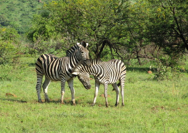 Wildlife Safari Tours from Johannesburg