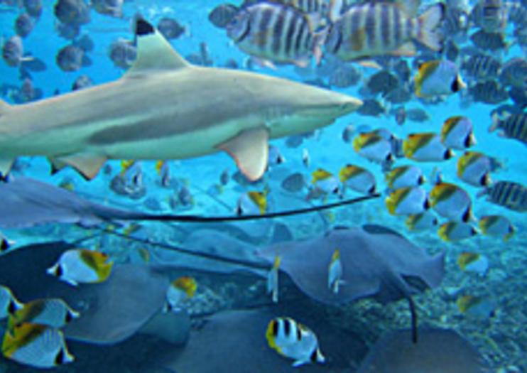 Lagoonarium – Attraction de Tahiti