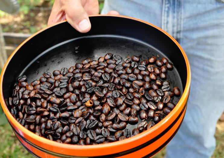 Kona Coffee Tours on the Big Island of Hawaii